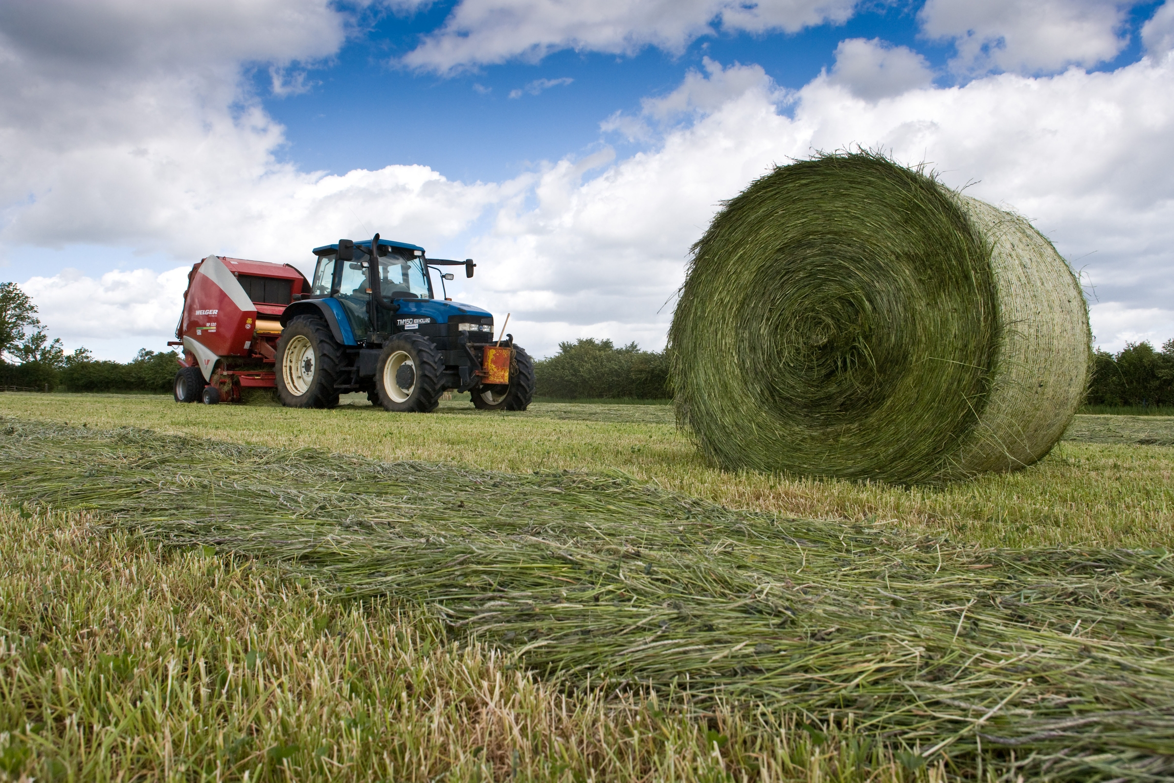 silage making Forage conservation techniques: silage and haylage production high-moisture silage is ≤ 30% dry matter concentration medium-moisture silage is 30% to 40% dry.